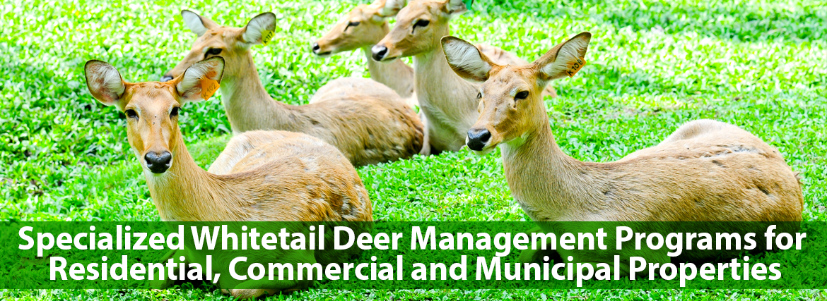 Specialized Whitetail Deer Management Programs